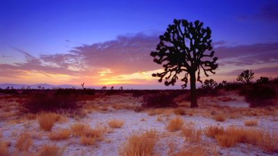 sunset-in-mojave-desert1